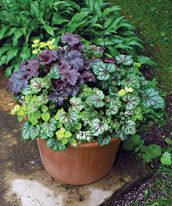 Using Perennials in Pots - Fine Gardening Article