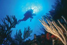Puerto Rico Pictures: La Parguera Diving
