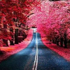 The road less traveled...
