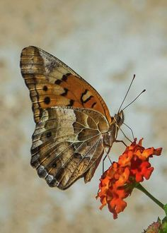 Butterfly On Lantana by Mary Bellew