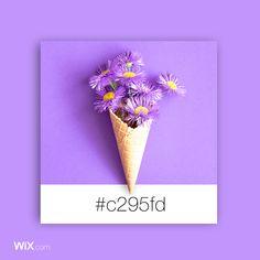 Color Palette Inspiration | Spring Violet | #c295fd