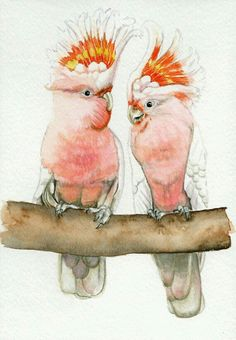 Pink cockatoo bird painting print from original watercolor painting exotic tropical bird wall art Earthspalette from Earthspalette on Etsy. Watercolor Animals, Watercolor And Ink, Watercolor Paintings, Art And Illustration, Illustrations, Bird Wall Art, Bird Artwork, Animal Paintings, Animal Drawings