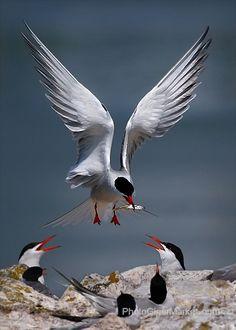 .=]bird feeding birds fish
