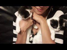 KITTENS - YouTube Kittens, Cats, Bob Marley, Action, Youtube, Animals, Cute Kittens, Gatos, Animales