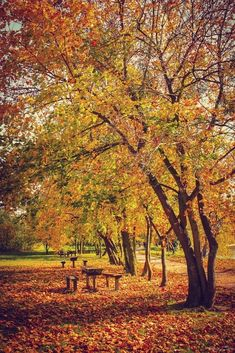 The post (notitle) autumn scenery appeared first on Trendy. Late Summer Flowers, Autumn Walks, Autumn Scenery, Golden Days, Picnic Time, City Landscape, Fall Pictures, Four Seasons, Woodland