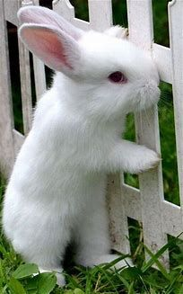 Does bunny want in or out?