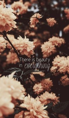 iPhone Wallpaper There is beauty in everything. Quotes - - iPhone Wallpaper There is beauty in everything. Quotes – – Rümeysa Lilya Öztürk iPhone Wallpaper There is beauty in everything. Quotes – iPhone Wallpaper There is beauty in everything.