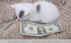 how big is he a dollar.
