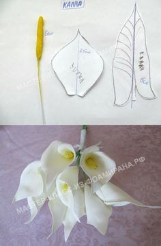 2 выкройки цветка каллы из фоамирана | Мастер-класс из фоамирана