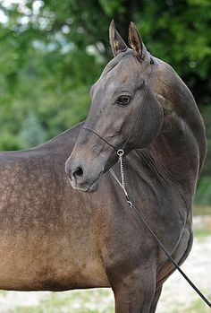 Horse Info Page - Alania Stud