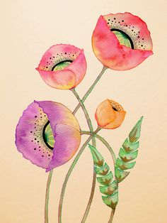 Poppies, by Colleen Parker
