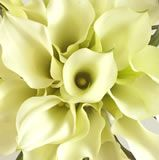 Mini-Callas_6 vista floral through costco $129 60 stems