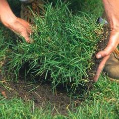 Lawn Care Basics: The Grass is Always Greener Lawn Care Tips, Landscape Maintenance, Lawn Sprinklers, Growing Gardens, Green Lawn, Garden Care, Lawn And Garden, Outdoor Living, Grass