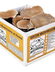 Portabella Mushroom Kit $43