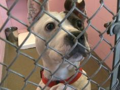 URGENT!!! Packed shelter in Sherwood, Arkansas may have to euthanize.