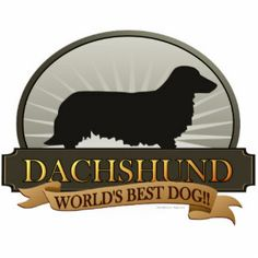 Dachshund [Long-haired] Photo Cut Outs Dachshund Puppies For Sale, Dachshund Art, Daschund, Dachshunds, Crusoe The Celebrity Dachshund, Pet Dogs, Weiner Dogs, Doggies, Dog Anxiety