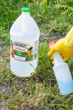 Amazing Ways To Use Vinegar – Country Diaries Household Cleaning Tips, House Cleaning Tips, Cleaning Hacks, Natural Cleaning Solutions, Natural Cleaning Products, Diy Products, Diy Cleaners, Cleaners Homemade, How To Clean Silverware