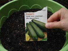 Comment faire pousser des courgettes dans un pot sur son balcon