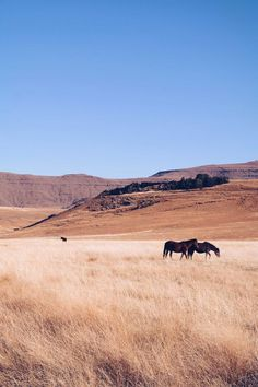 Mbona Nature Reserve, South Africa
