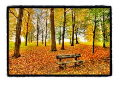 sacred grove Sacred Groves, Lake Photography, Seasons Of The Year, Autumn, Fall, Red Gold, My Dream Home, Bench, Rustic