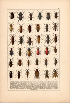 Beetles Antique Print Insects Vintage Lithograph by Craftissimo, €14.00