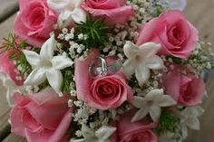 Pink roses and baby's breath