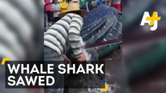 Two Men Cut Giant Whale Shark Into Pieces While It's Still Alive