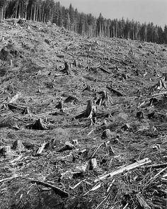 "Robert Adams ""Clearcut, Humbug Mountain, Clatsop County, Oregon,"" 1999-2003 From the series ""Turning Back"" Gelatin silver print, 14 x 11 inche"