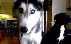 5 Videos of Dogs Saying Humanly Things