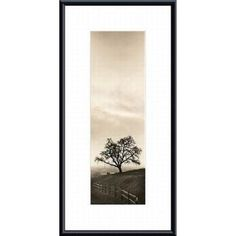 Free Shipping when you buy Barewalls 'Sentinel Oak Tree' by Alan Blaustein Framed Photographic Print at Wayfair - Great Deals on all Decor products with the best selection to choose from!