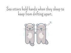 Sea otters hold hands when they sleep to keep from drifting apart