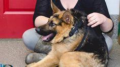 Quasimodo the dog has a short spine but a big heart (and needs a home)