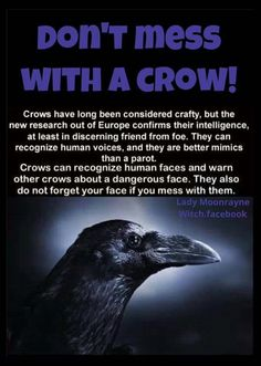 Narrative re crows. Picture is Raven. Fun Facts About Animals, Animal Facts, Animals And Pets, Funny Animals, Cute Animals, Smart Animals, All Nature, Amazing Nature, Science Nature