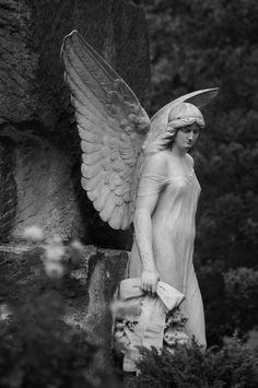 Angel sculpture at the Melaten Cemetery in Cologne, Germany. Cemetery Angels, Cemetery Statues, Cemetery Art, Angel Statues, Angels Among Us, Angels And Demons, I Believe In Angels, Ange Demon, Guardian Angels