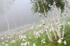 #nature #flora #japan #landscape