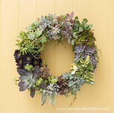 Succulent Wreath http://sulia.com/my_thoughts/076edbdf-eb0a-4d59-a2c4-8e6bbb708708/?pinner=undefined