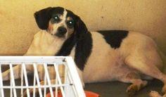 ADOÇÃO - SENHORA by ADOTE ANIMAIS, via Flickr Dogs, Animals, Pet Adoption, Animales, Animaux, Doggies, Animal, Animais, Dieren