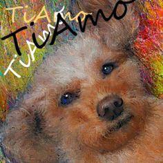 PCペイントで絵を描きました! Art picture by Seizi.N:   愛犬ティアモの絵を描きました、親(犬)バカでしょうか可愛いです。  alex ubago - Me muero por conocerte.- http://youtu.be/YLzpPlxATag