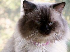 A Gruff Looking cat
