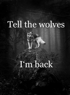 Save Gray Wolf, buy quality products and provide wolf sanctuary! Wolf Pack Quotes, Wolf Qoutes, Lone Wolf Quotes, True Quotes, Motivational Quotes, Inspirational Quotes, Wolf Spirit Animal, Wolf Love, Wolf Pictures