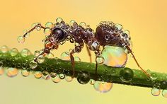 photos of insects with water drops,  by Ondrej Pakan