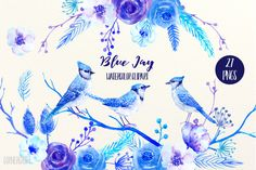 Watercolor Clipart Blue Jay @creativework247
