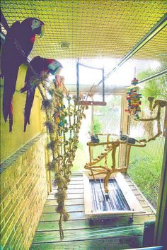 Parrot play area. It would be so cool to put in a fountain of some sort