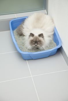 why does my female cat spray in the litter box