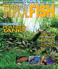 The planted tank issue of TFH Magazine features a range of articles for every aquascaper. Be sure to also check out pieces on everything from picking out blue fish to work in your community, keeping giant kribs, comparing UV vs ozone sterilization, and much more! http://www.tfhmagazine.com/buy-this-issue.htm