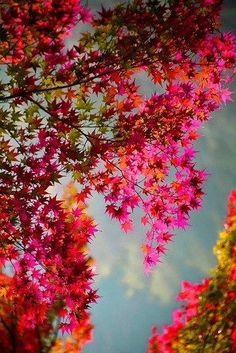 Unusual fall leaves