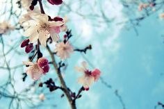 blue skies and hope by elizabetht, via Flickr