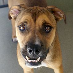 silly SONNY - Rescue a dog and give him a forever home.
