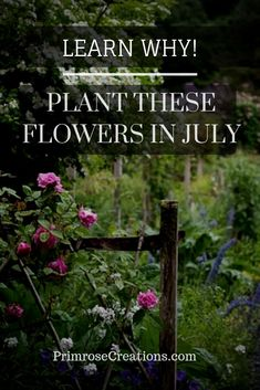 The end of June is often considered the end of the planting season. Knowing what flowers to plant in July can take your landscape to another level! Homestead Gardens, Farm Gardens, Flowers Perennials, Planting Flowers, Chrysanthemum Morifolium, July Flowers, Flora Farms, Flower Landscape, Flower Farm