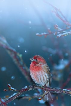 "10bullets: "" Little puzzled bird in first snowfall by Shibuya Sakura on Flickr. """